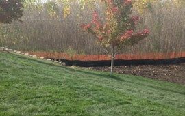 Sod with silt fence and tree protection